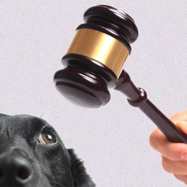 Who Gets the Pet In Divorce